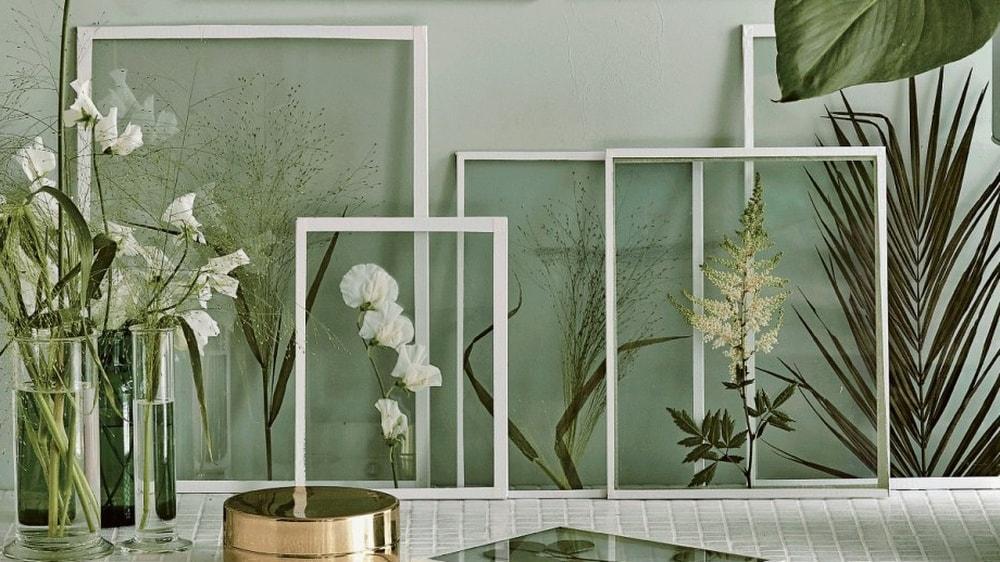 растения за стеклом