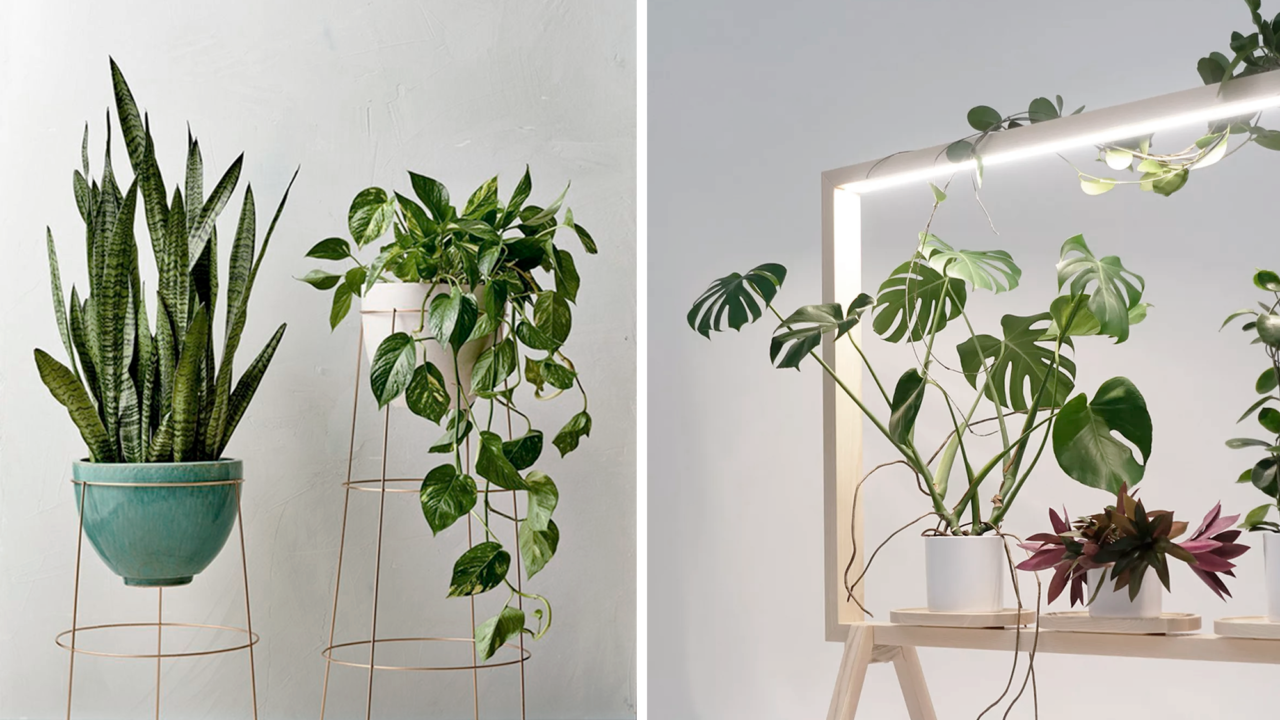 Как подобрать комнатные растения