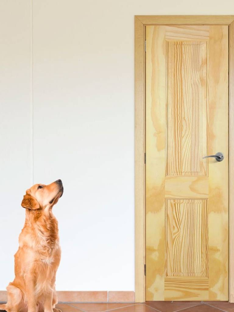 Дверь стал